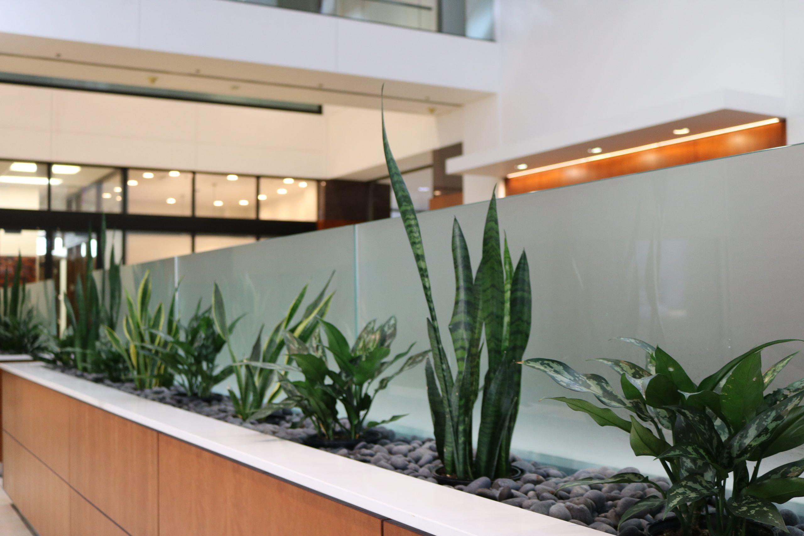 Interior Landscape Design & Installation
