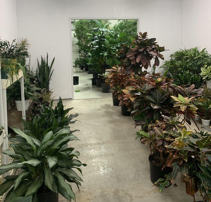 interior plant maintnenace and rentals