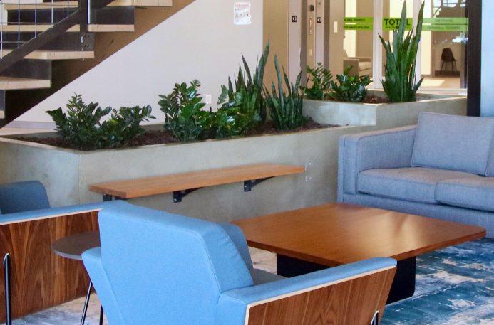 biophilic interior design by Intermountain Plant Works