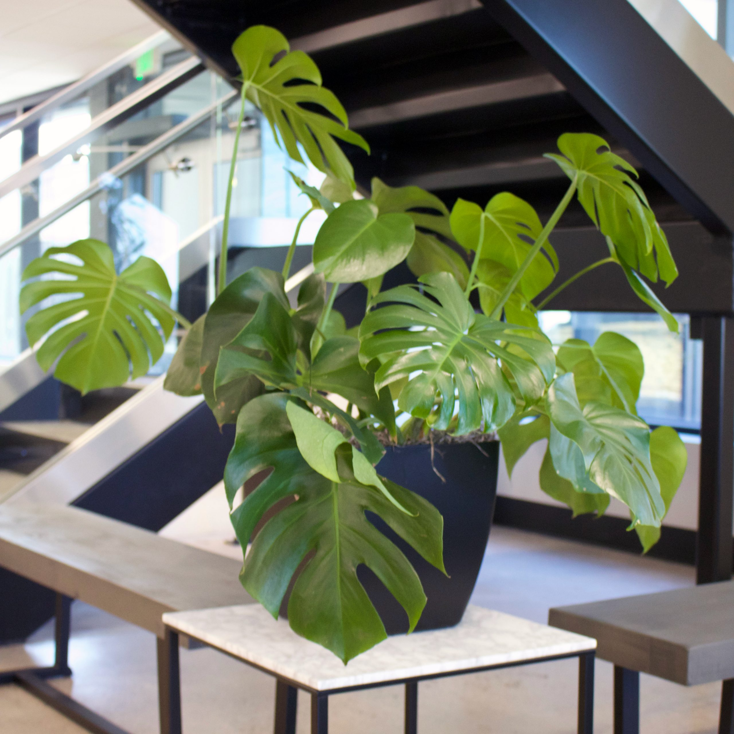 Interior Flowering Plants, Foliage Plants & Plant Containers