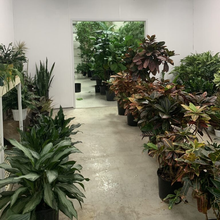 Plant Maintenance by Intermoutain Plant Works in Salt Lake City, UT